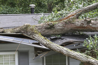 Fallen branch in Choctaw after a storm.